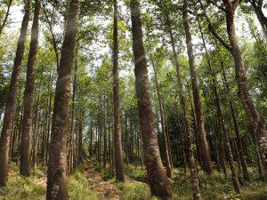 Tổng quan về Trầm Hương và 4 loại Trầm Hương tự nhiên hiện nay 7