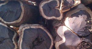 Cây Gỗ Mun - những đặc tính và các loại gỗ mun 8