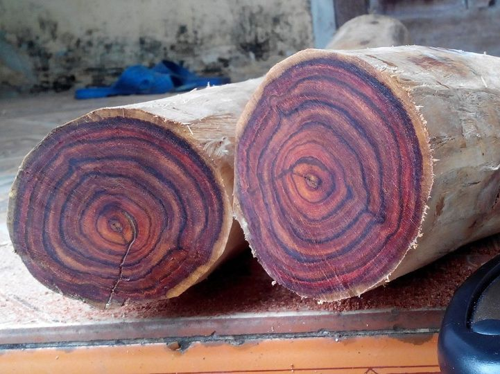 Cây gỗ Sưa - và các loại gỗ Sưa 1
