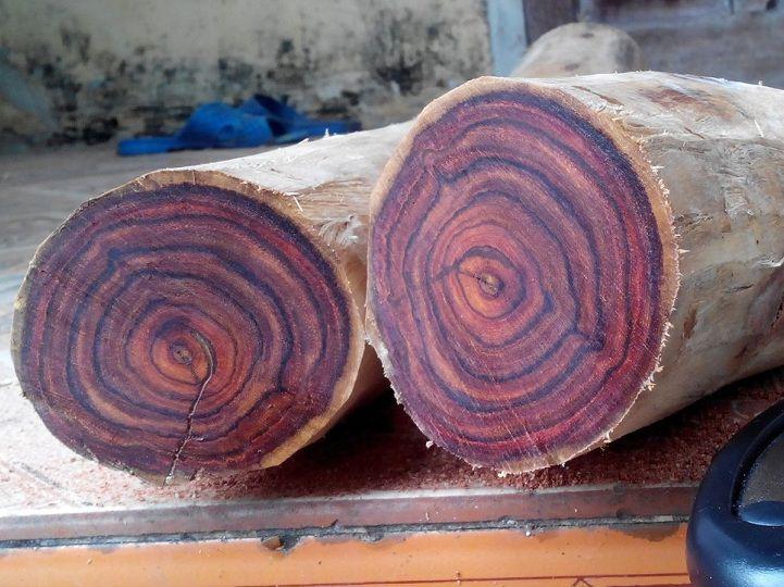 Top 9 loại gỗ quý hiếm nhất trên thế giới 3