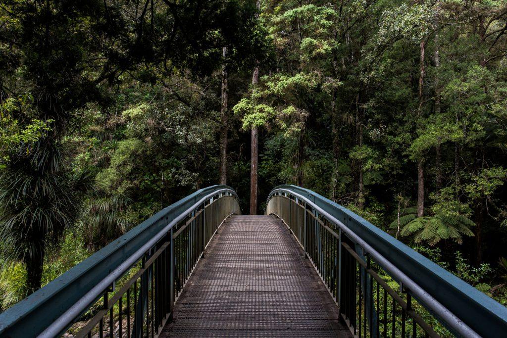 Hình nền thiên nhiên đẹp về cây cầu trong rừng xanh (Kích thước hình lớn 1950 x 1300)
