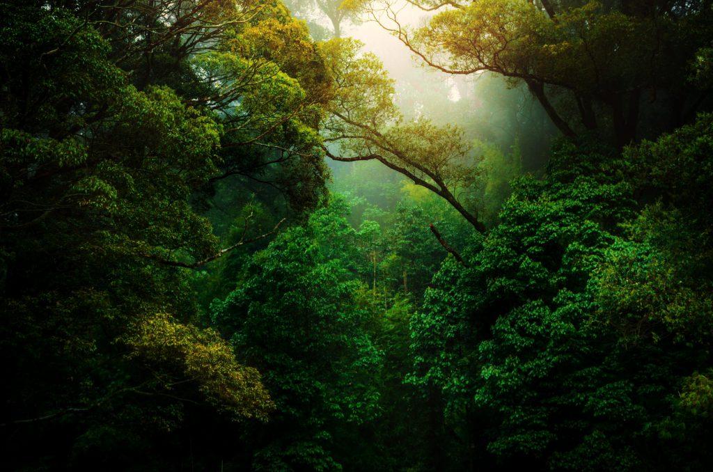 Hình nền rừng cây xanh đẹp đầy sức sống (Kích thước hình lớn 1950 x 1300)