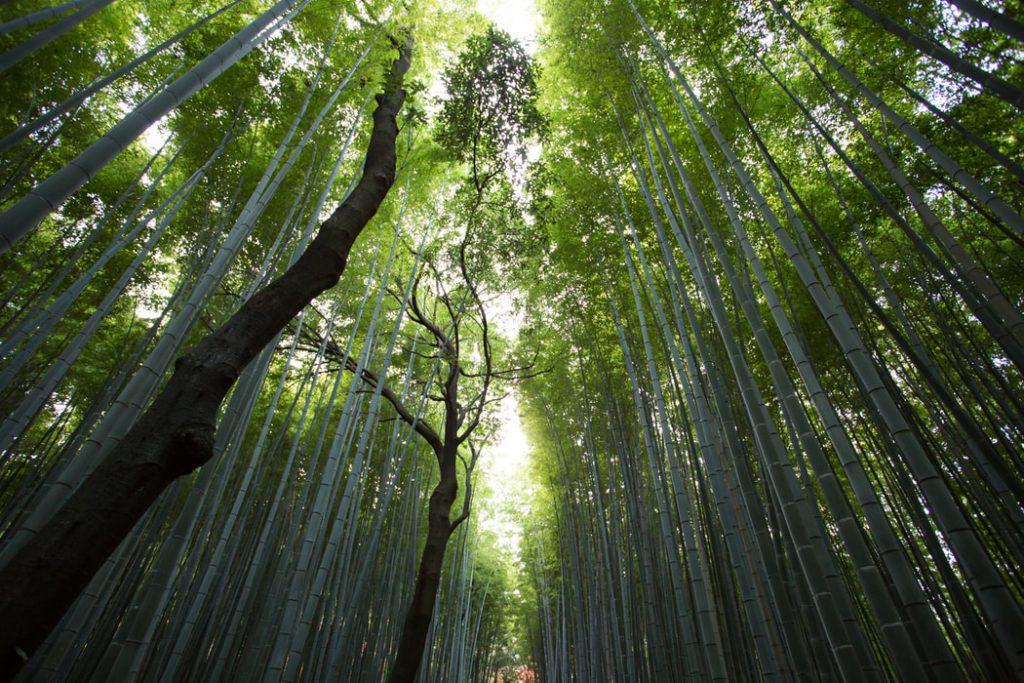 Hình nền rừng cây tre xanh nhìn cực ngầu và cực đẹp (Kích thước hình lớn 1950 x 1300