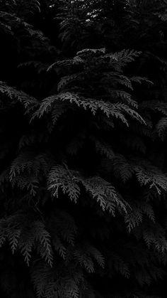 Hình nền điện thoại cây lá màu đen siêu đẹp