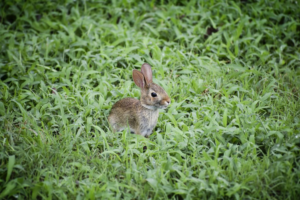 Hình nền laptop cute về con thỏ dễ thương