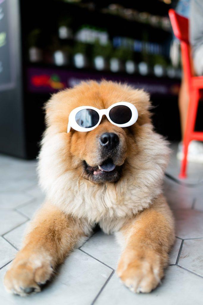 Hình nền chú chó đáng yêu mang kính