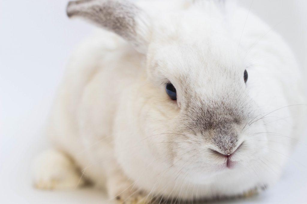 Hình nền chú thỏ full hd cute