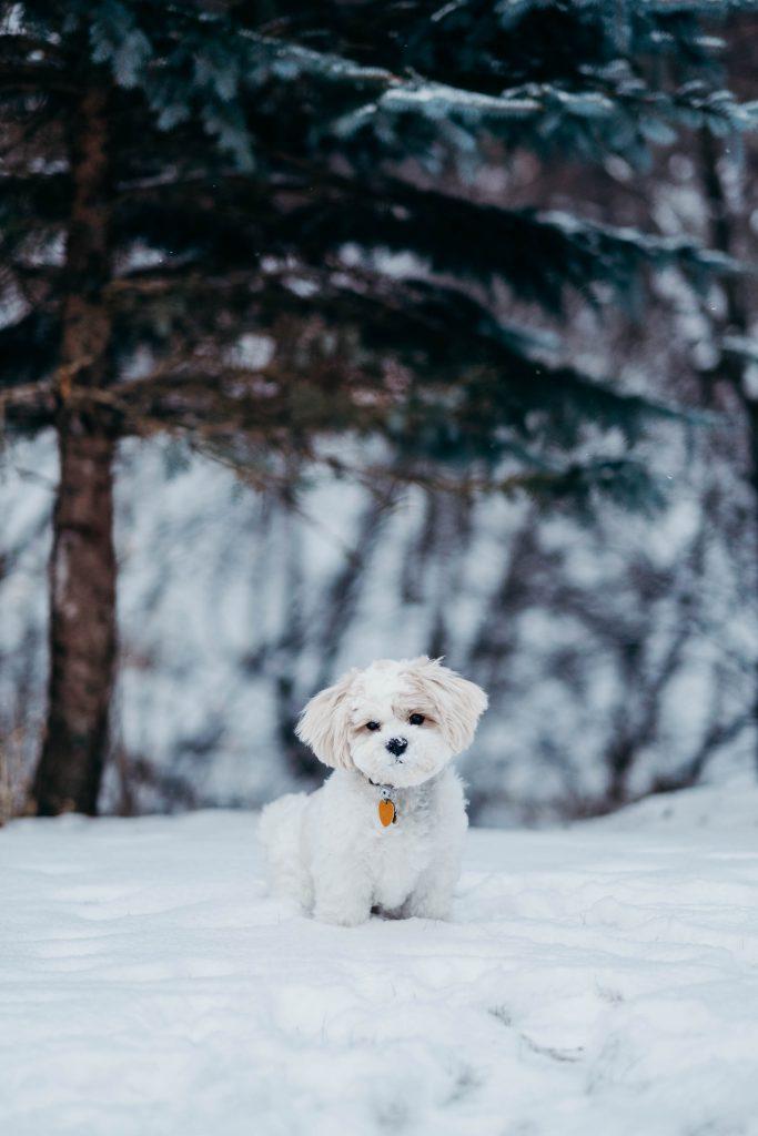 Hình nền chú chó con lạc giữ đồi tuyết lạnh giá