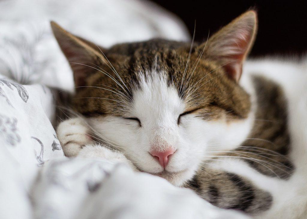 Hình nền laptop cute về mèo ngoan