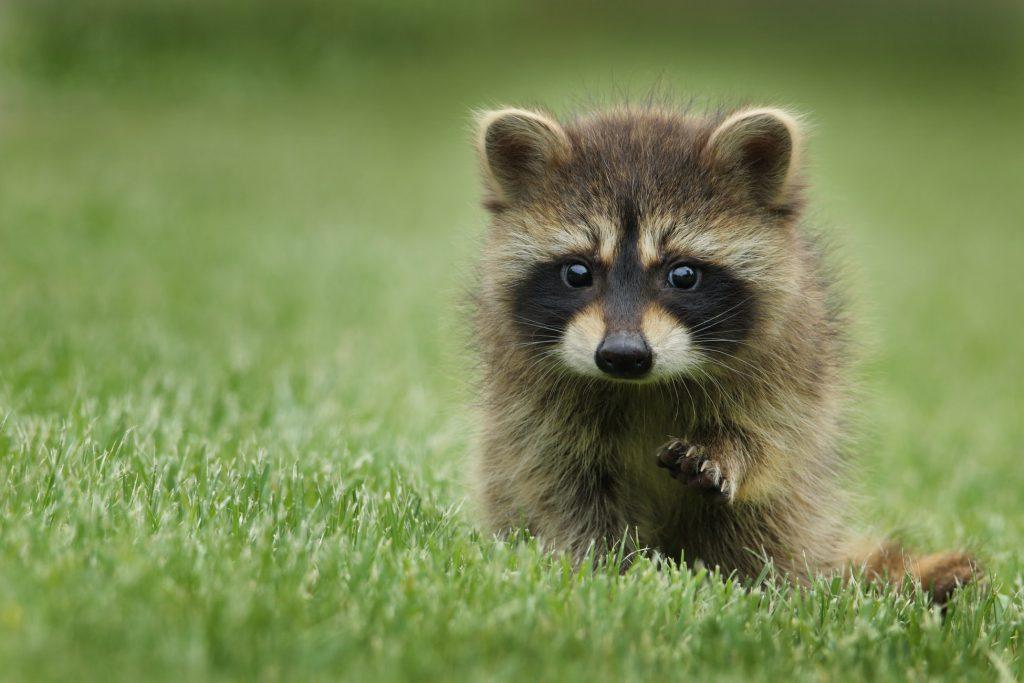 Hình nền laptop cute về con vật đáng yêu