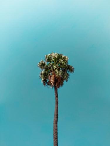 Hình nền cây cọ dành iPhone đẹp