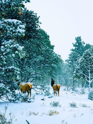 Hình nền hai chú hưu trong rừng đẹp dành cho IPhone 11
