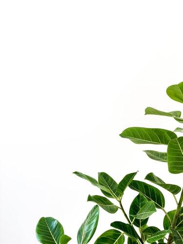 Hình nền iPhone 7, iPhone 7S, iPhone 7 Plus đẹp, Độc Đáo về lá cây xanh tươi
