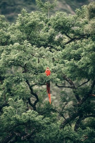 Hình nền iPhone 7, iPhone 7S, iPhone 7 Plus cực ngầu về chú chim két trong rừng