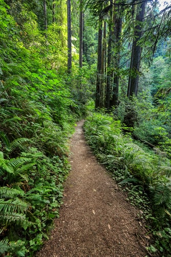 Hình nền rừng núi với lối mòn xanh ngát dành cho iPhone