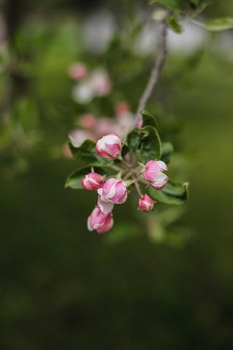 Hình nền bông hoa dành cho iPhone đẹp và chất