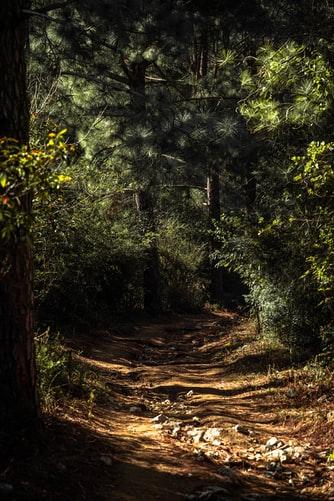 Hình nền về rừng hùng vĩ dành cho iPhone