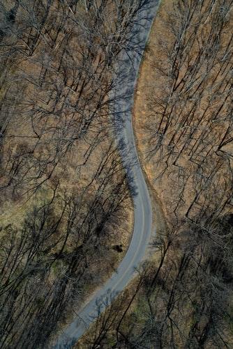 Hình nền iPhone Xs cực độc về con đường giữ rừng hoan