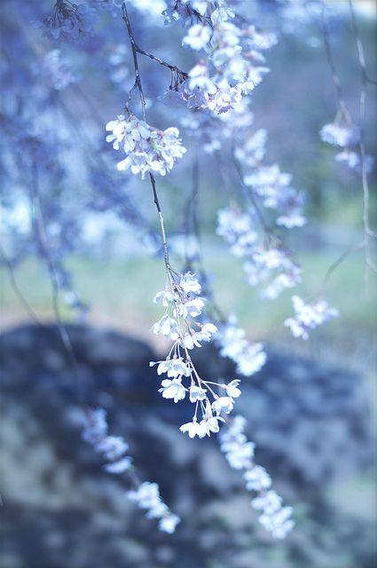 Hình nền hoa tự nhiên dành cho điện thoại đẹp