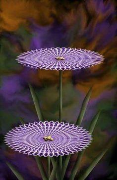 Hình nền hoa lan dành cho điện thoại