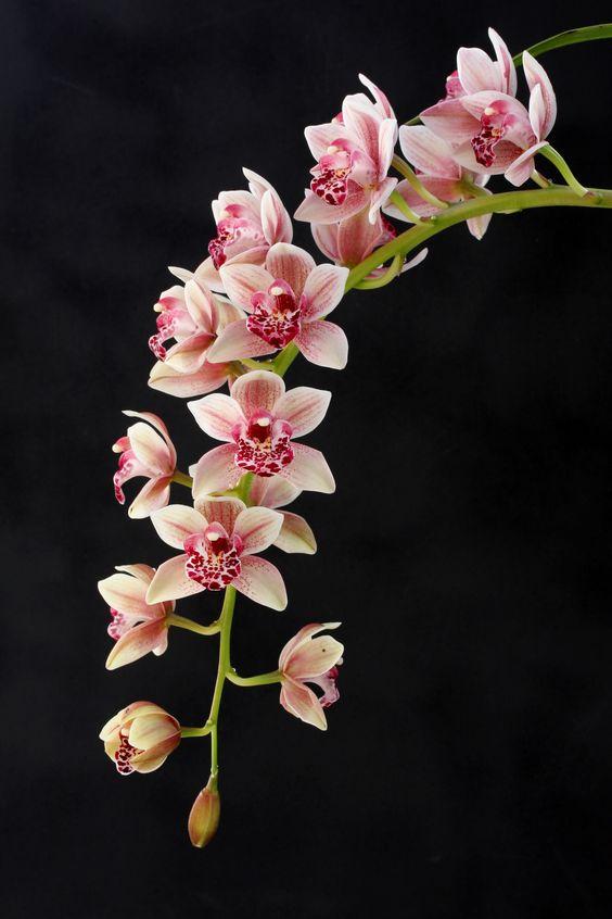 Hình nền hoa lan đẹp dành cho điện thoại