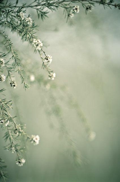 Hình nền hoa đẹp dành cho điện thoại