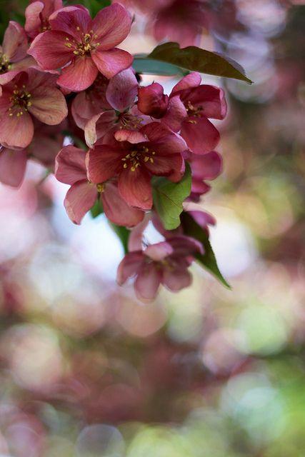 Hình nền hoa dành cho điện thoại đẹp