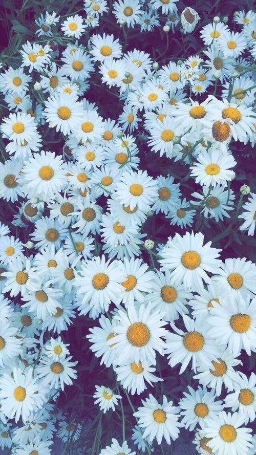 [TOP 100+] Hình nền hoa đẹp cho điện thoại 2020 30