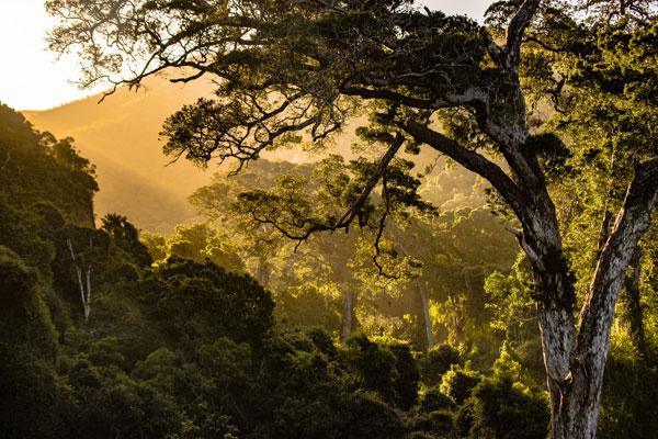 Hình nền dành cho máy tính rừng cây đẹp và yên bình