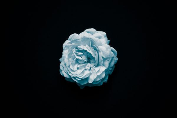 Hình nền dành cho máy tính bông hoa trắng giữa bóng tối