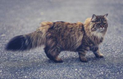 Ảnh mèo ngầu và chất