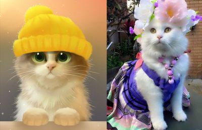 Hình ảnh mèo cute đẹp và đáng yêu
