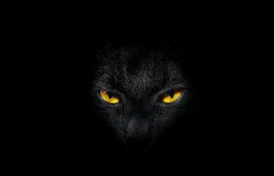 Top 60 Hình ảnh mèo đen đẹp, buồn, chất nhất hiện nay