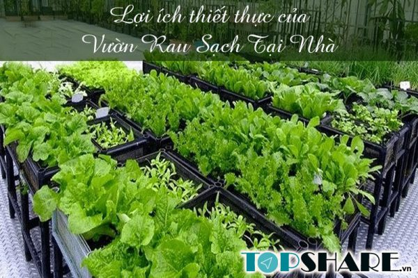 Lợi ích thiết thực của vườn rau sạch tại nhà